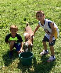 Goat Helpers