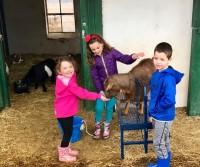Goat Tour